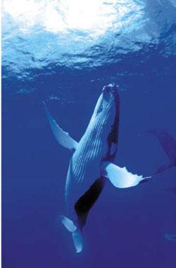geode dauphins baleines